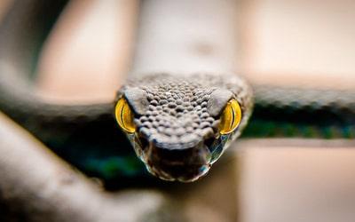 Сонник змія нападає