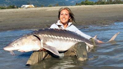 Сонник велика риба